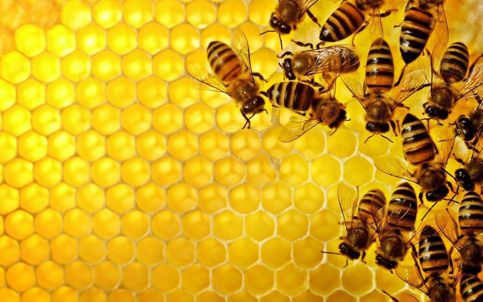 Bees On Hive HD Wallpaper   Byherbs 1680x1050