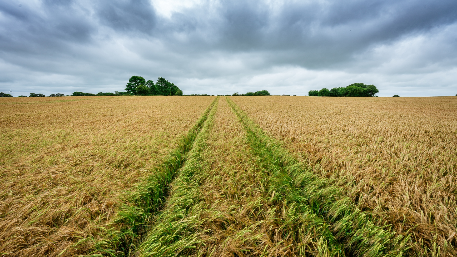 Download wallpaper 1920x1080 field rye spikelets harvest 1920x1080