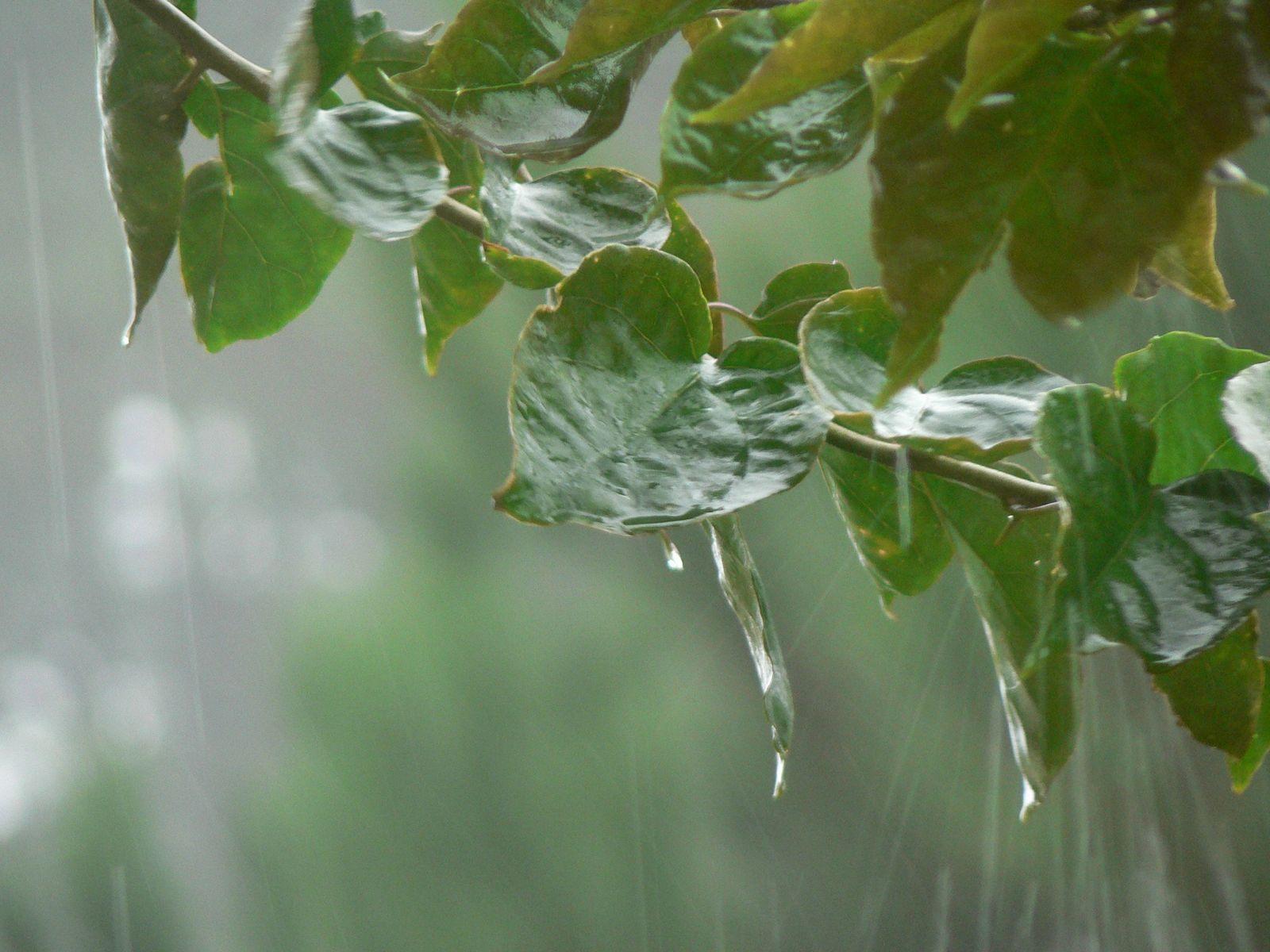 hd deskcomautumn rain wallpaperautumn rain wallpaper 1024 768html 1600x1200