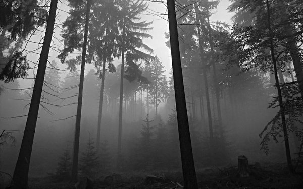 forest trees forest grayscale 1440x900 wallpaper Black and white 600x375