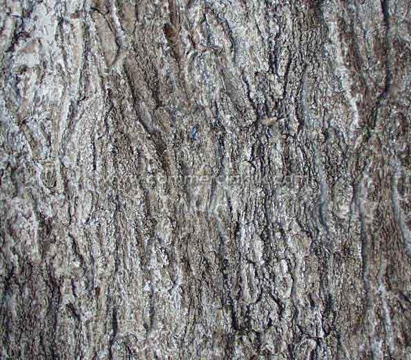 Black Oak Tree Bark Oak tree bark by commercial 595x521