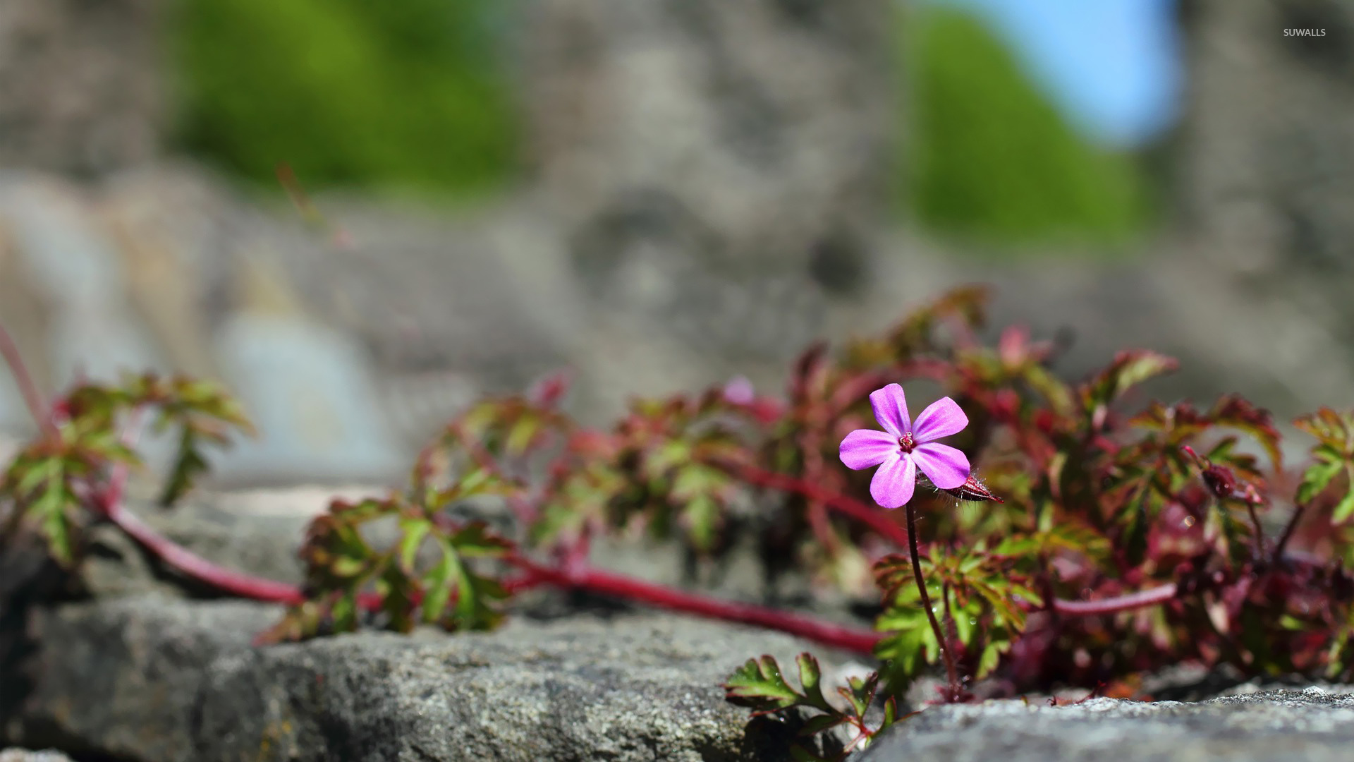 Small pink flower wallpaper   Flower wallpapers   20469 1366x768