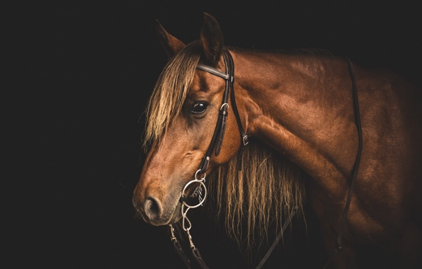 Wallpaper horse face background wallpapers animals   download 596x380