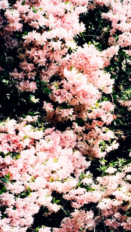 floral iphone wallpaper 423x750