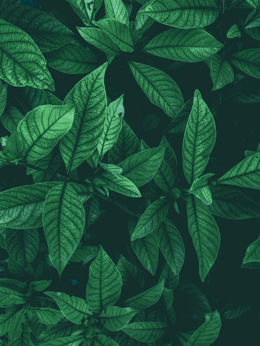 900 Leaf Background Images Download HD Backgrounds on Unsplash 1000x1333