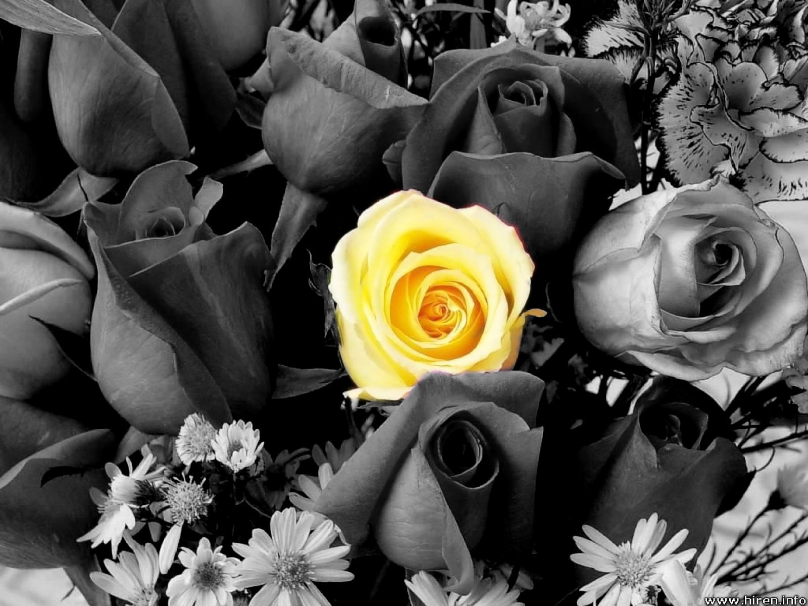 Blogs photography flowers black and white with color pictures 1600x1200