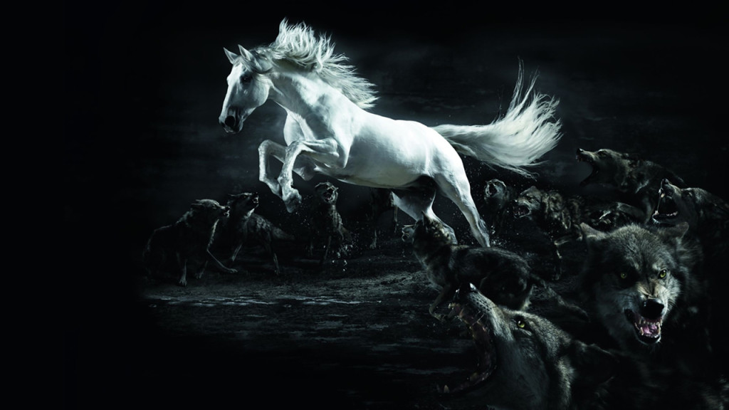 White Horse Wolf Wallpapers HD Wallpaper 3D Abstract Wallpapers 1024x576