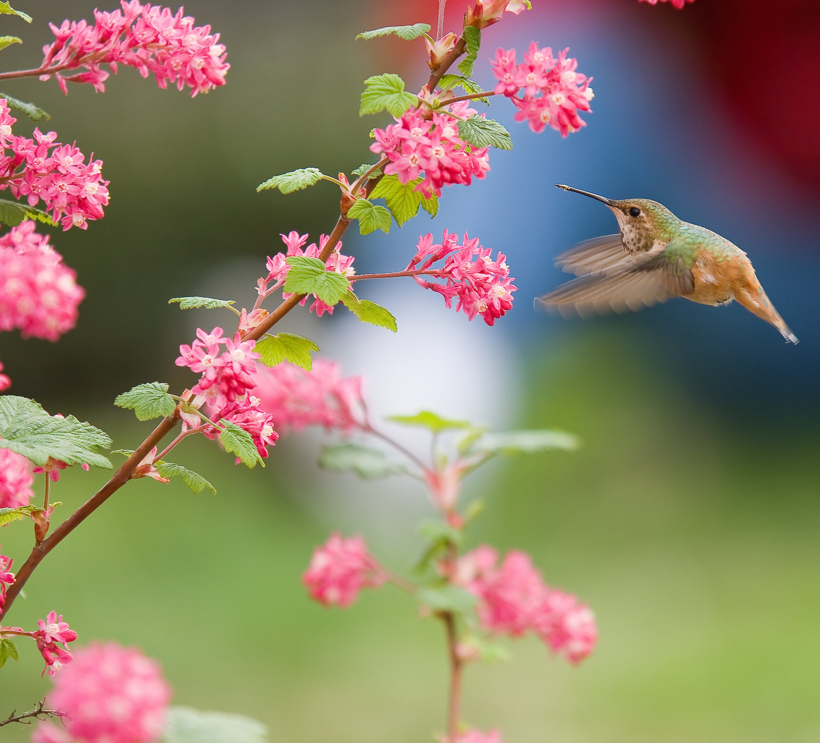 Free Bird And Flower Wallpaper