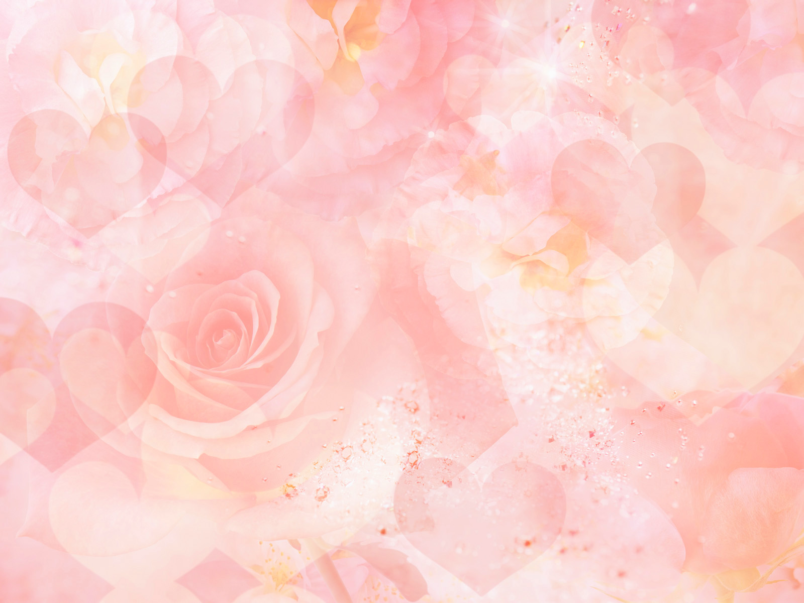 Flowers for Gt Light Pink Rose Background Wallpaper 1600x1200px 1600x1200