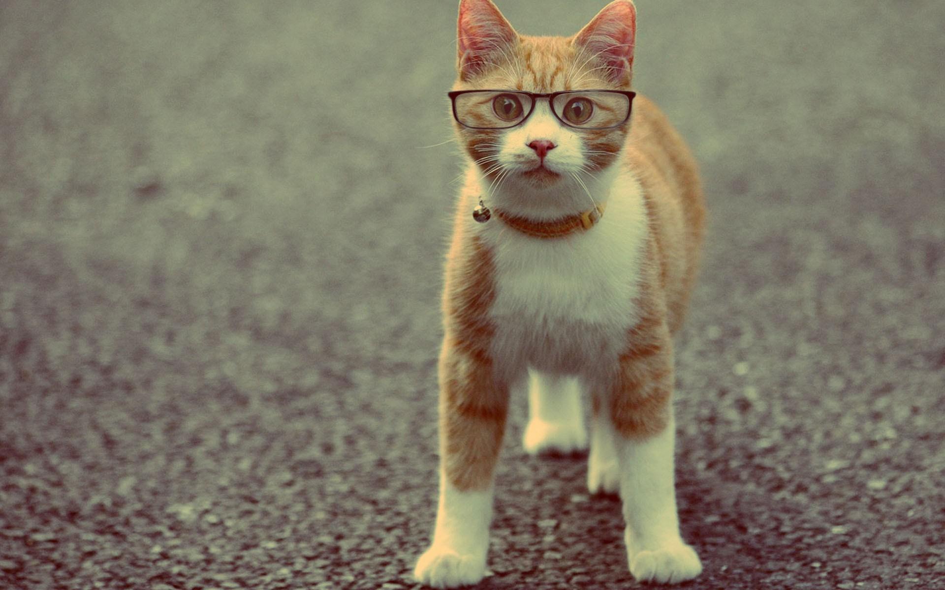 Cat in Glasses Wallpapers HD Desktop ImageBankbiz 1920x1200