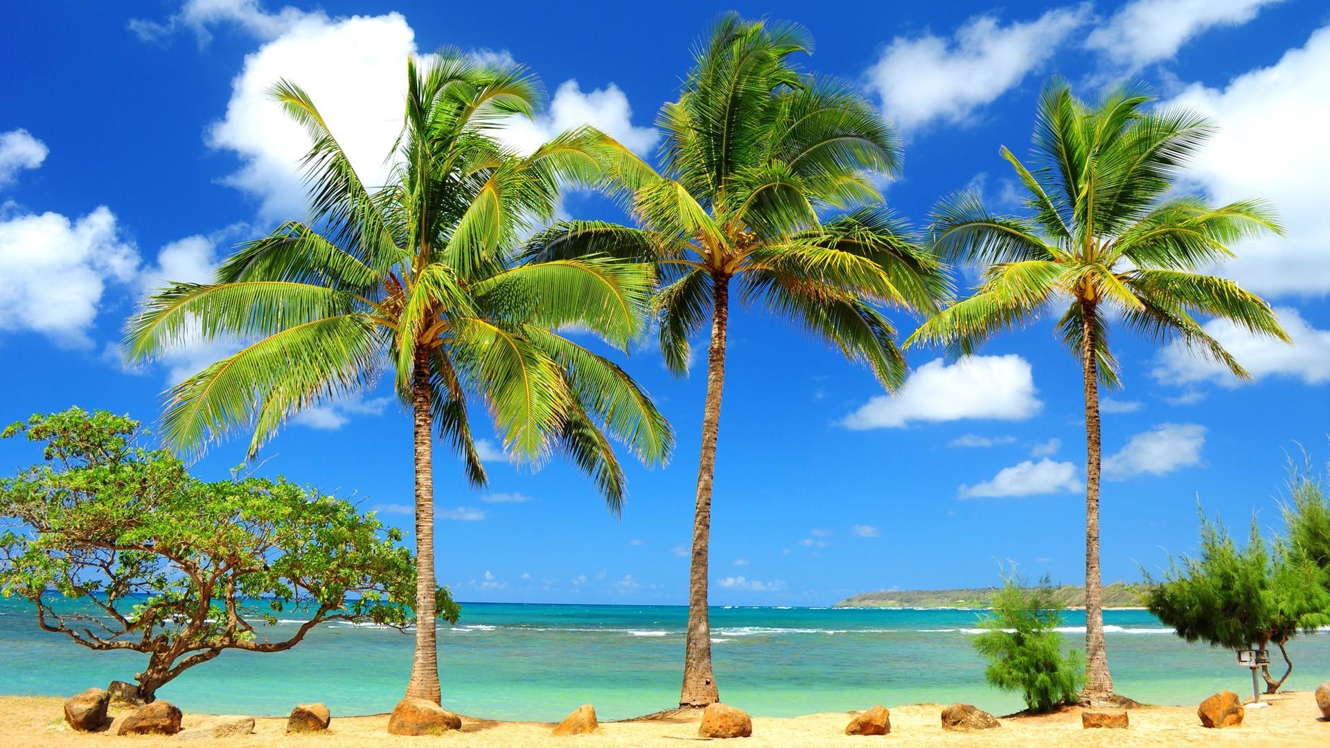 Palms in Kauai Hawaii wallpaper 2935 1920x1080