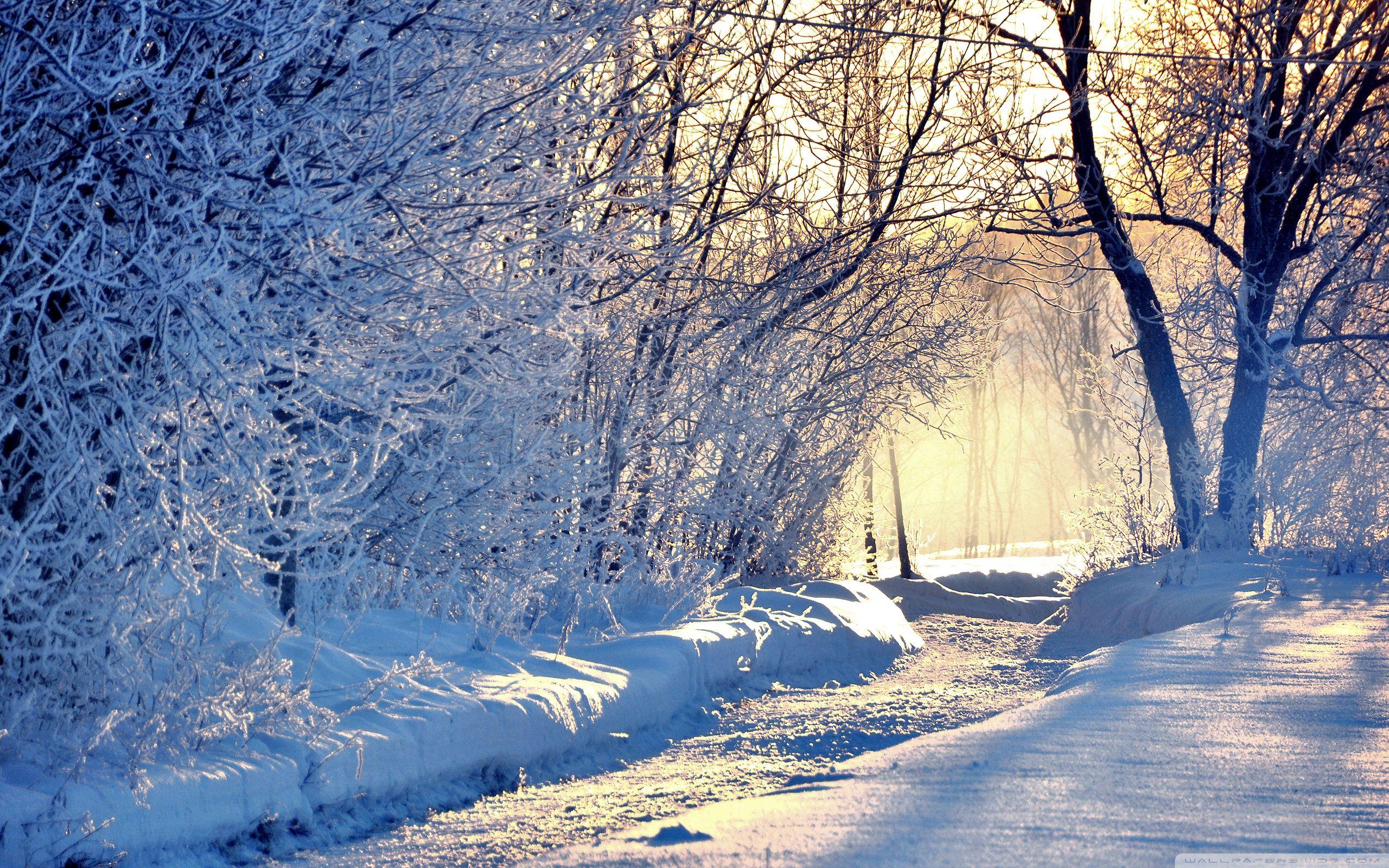 Winter Morning Light Wallpaper Full HD [2560x1600] 2560x1600