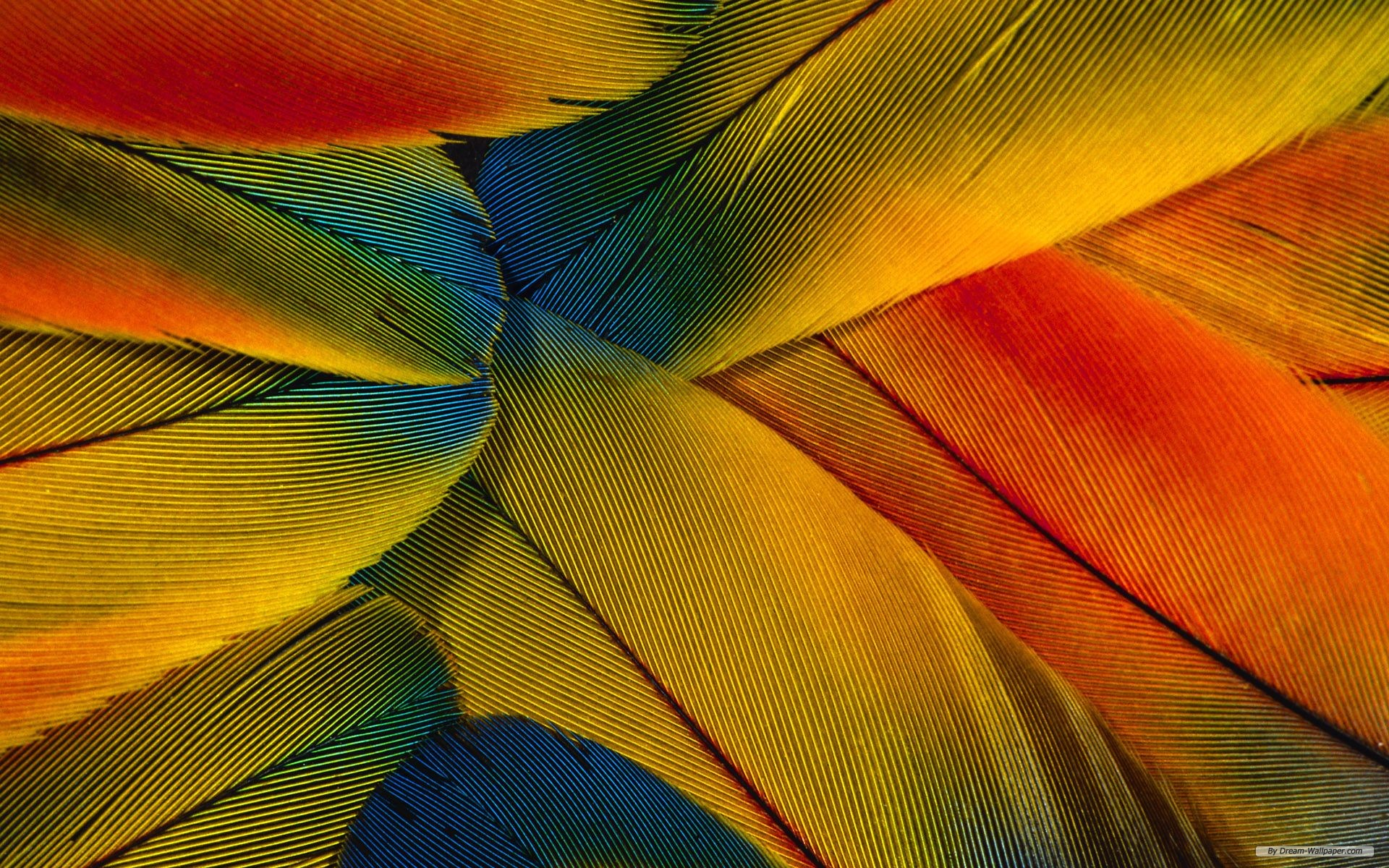 Close Up Feather wallpaper   369812 1920x1200