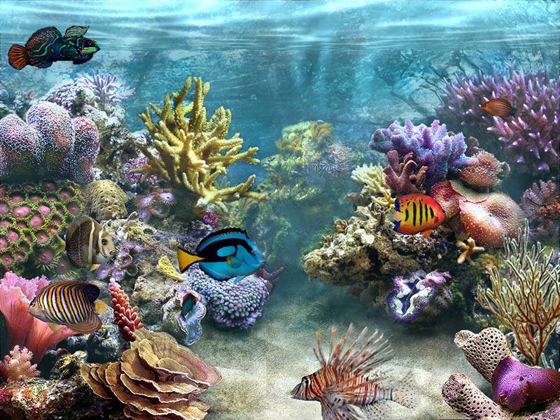 Sim Aquarium 26a Screensaver MegaGames 800x600