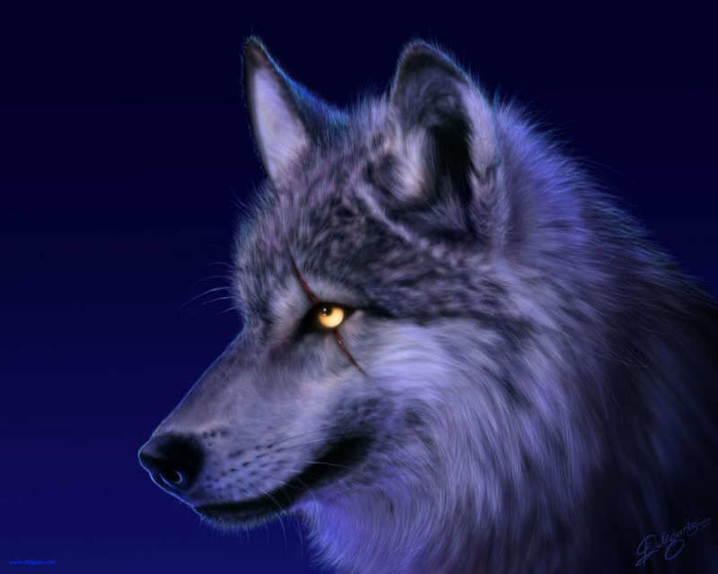 Really Cool Wolf Wallpapers 800x640