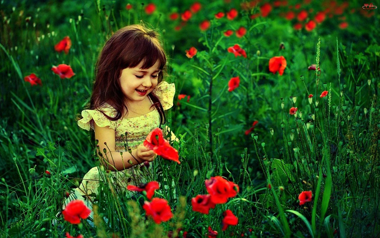 Cute Baby Girl With Red Flowers HD Wallpaper 1280 x 800 1280x800