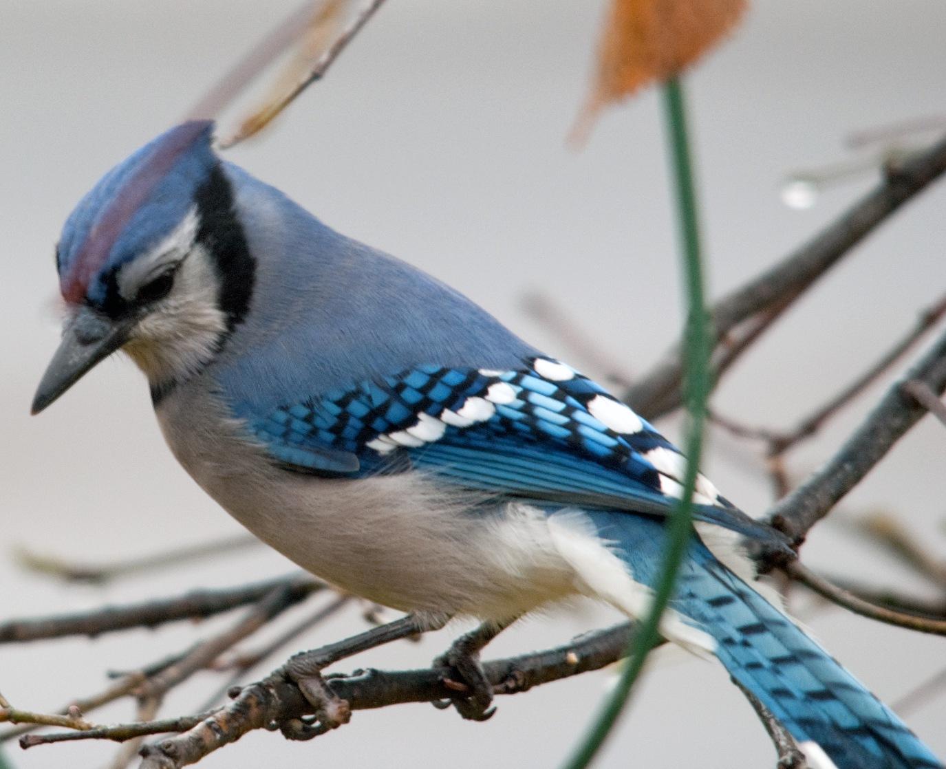 ptichki-pisayut