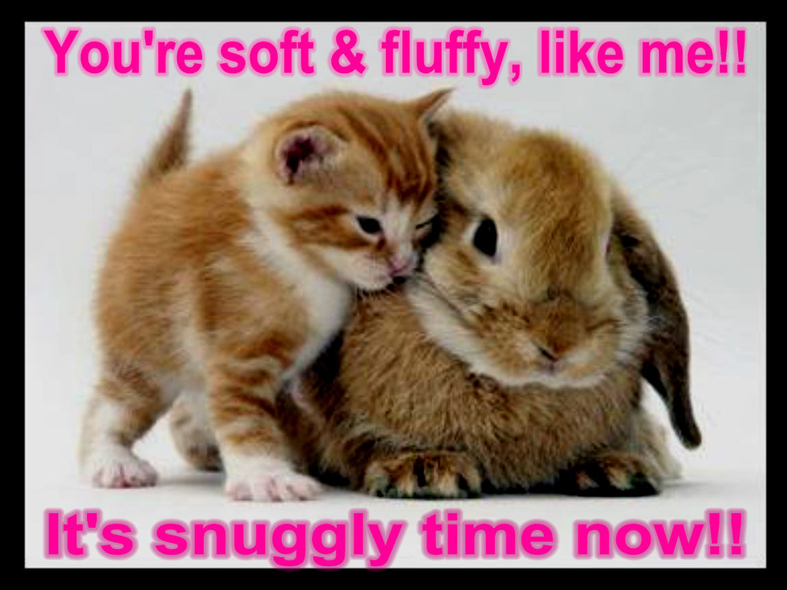 Funny Pictures cat bunny funny animal humor 1148x861