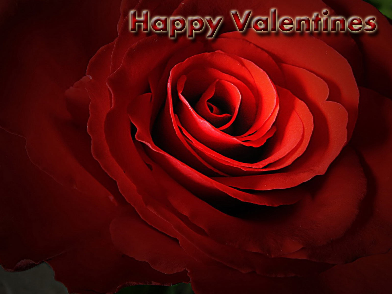 roses wallpapers valentine special wallpapers valentine wallpaper 1600x1200