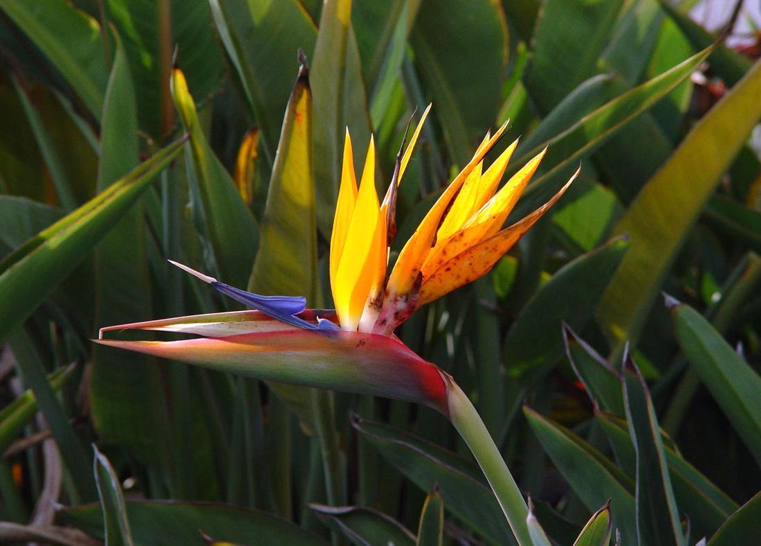 Bird Paradise Wallpaper Flower Wallpapers Design 1100x790