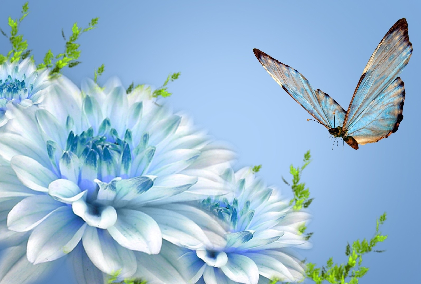 Butterfly Wallpapers Desktop Wallpapers 1600x1080