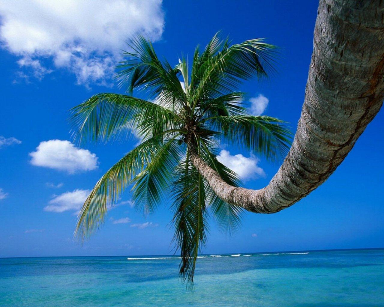 Palm Tree on a Beech computer desktop wallpaper 1280x1024