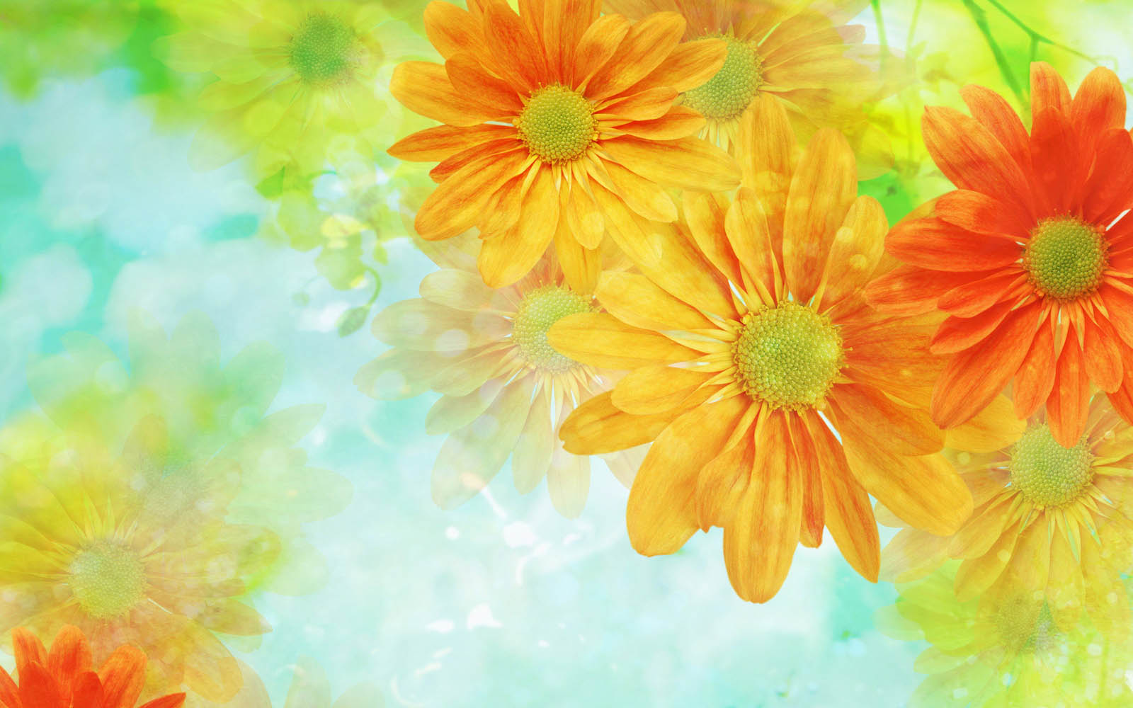 XS Wallpapers HD Flower Art Wallpapers 1600x1000