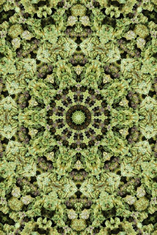 mandala wallpaper Tumblr 500x750