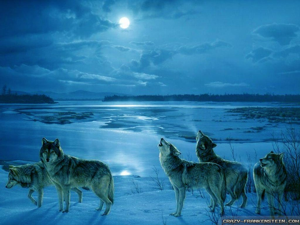 Wallpaper Wolf Cold Winters night wallpapers 1024x768