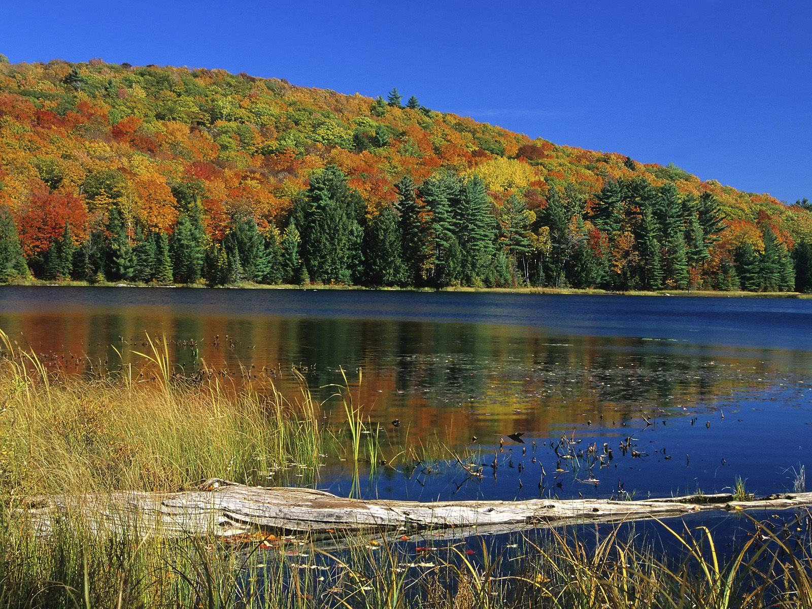 Wallpapers Backgrounds   Gatineau Park Quebec Canada Wallpapers 1600x1200
