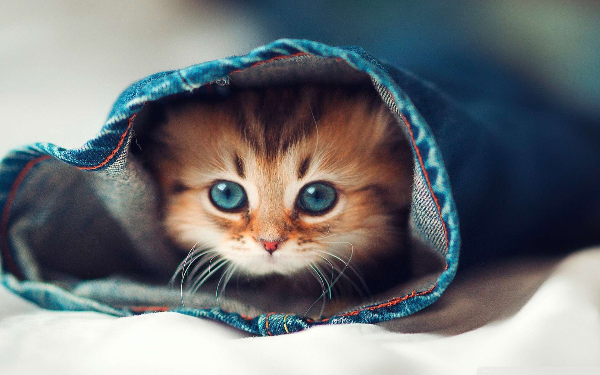 Wallpaper Cat Hqih Wallpaper 1080p HD Upload at February 15 2014 by 1920x1200