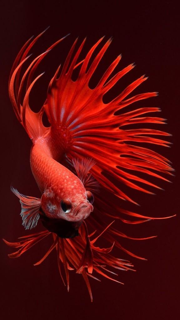 iphone 6s fish wallpapers wallpapersafari
