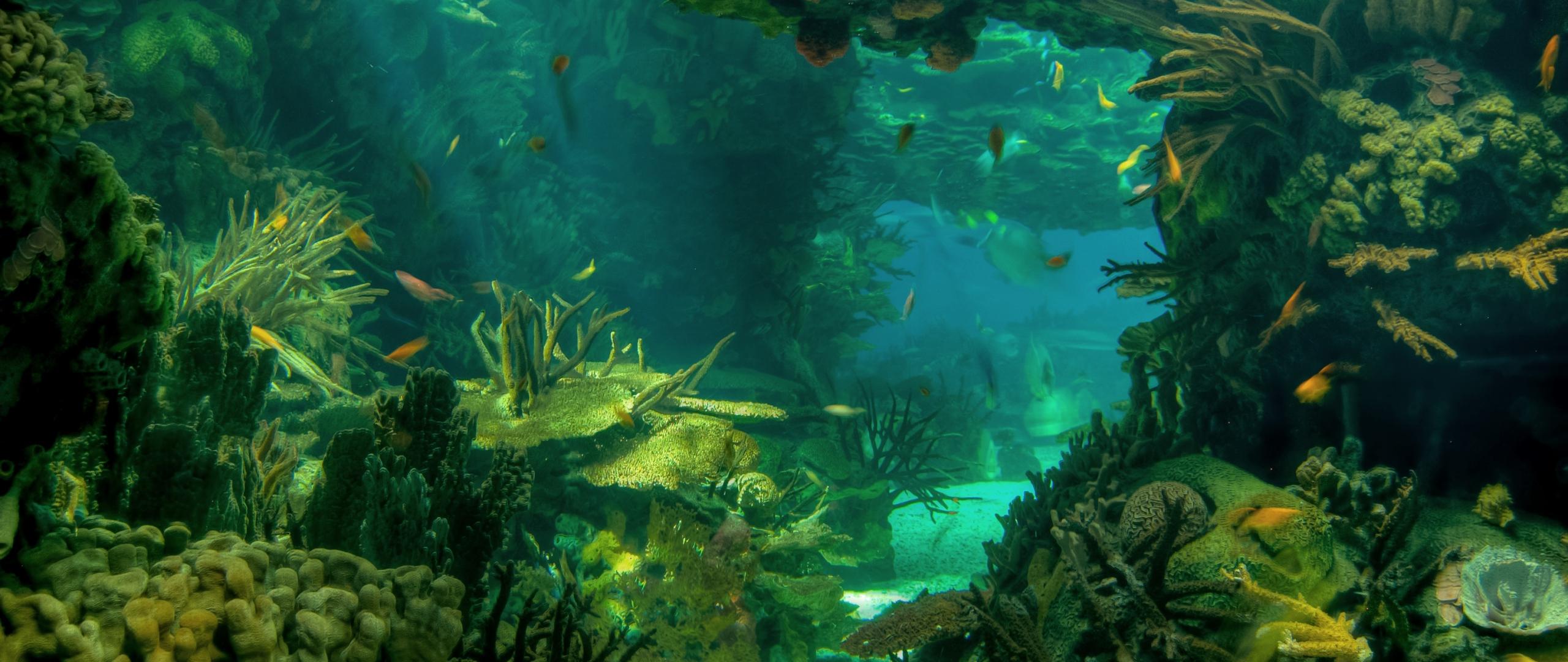 2560x1080 Wallpaper sea seabed landscape 2560x1080