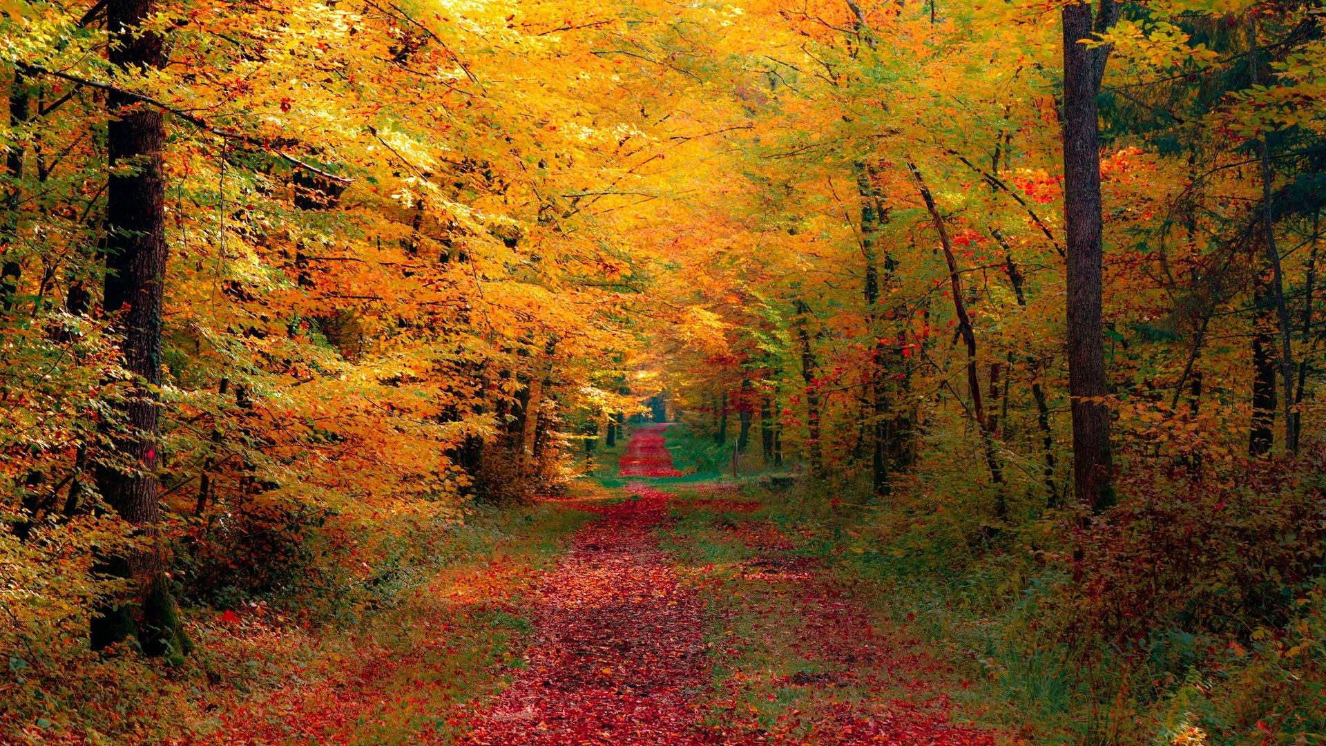 1920x1080 Autumn Forest desktop PC and Mac wallpaper 1920x1080