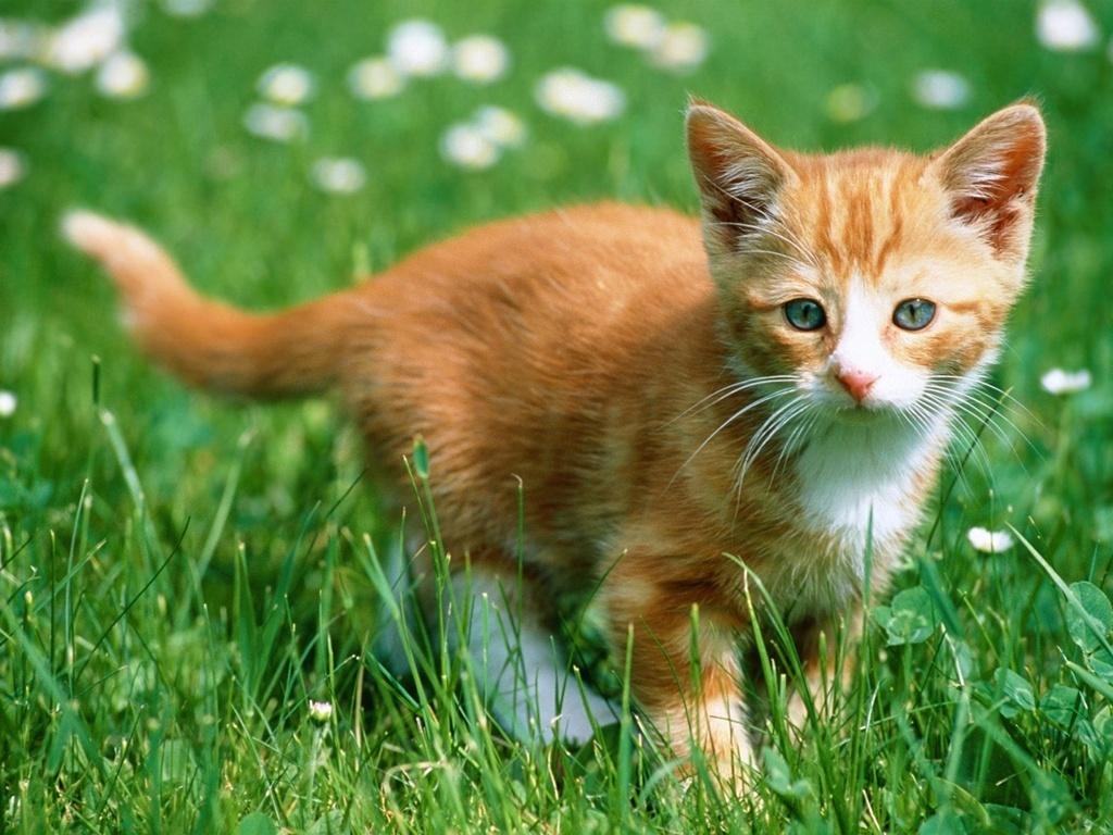 orange kitten   catsparrots and butterflies Wallpaper 22814262 1024x768