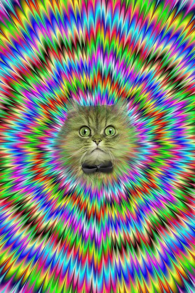 Free Download Cat Wallpaper Brain Games And Illusions