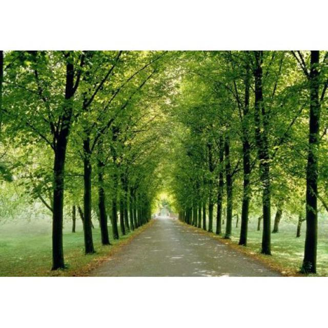 wallpaper wall mural on Good Feng Shui For Your Home Wall Murals 640x640
