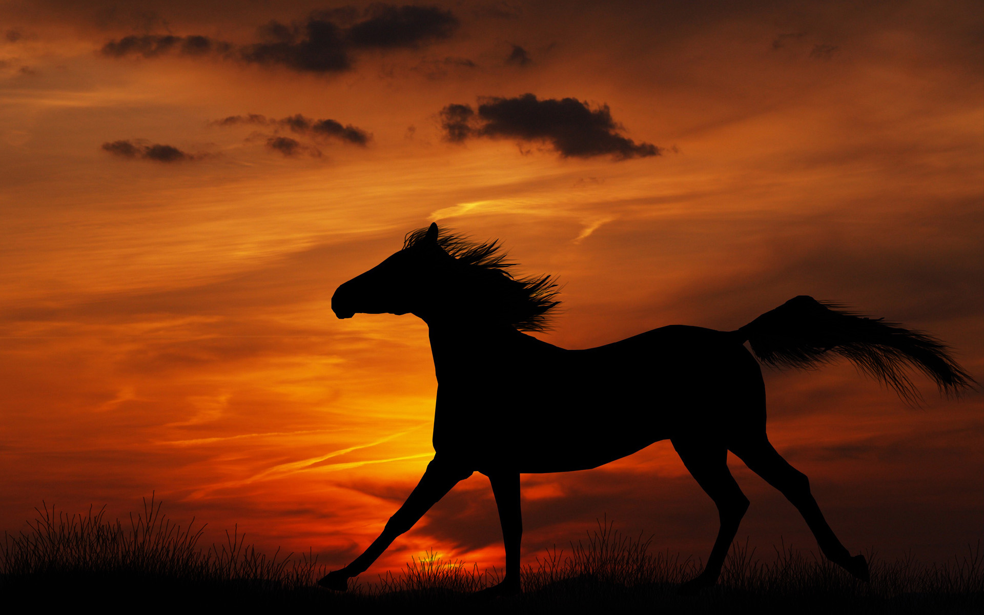 HD Horse Backgrounds Desktop 1920x1200