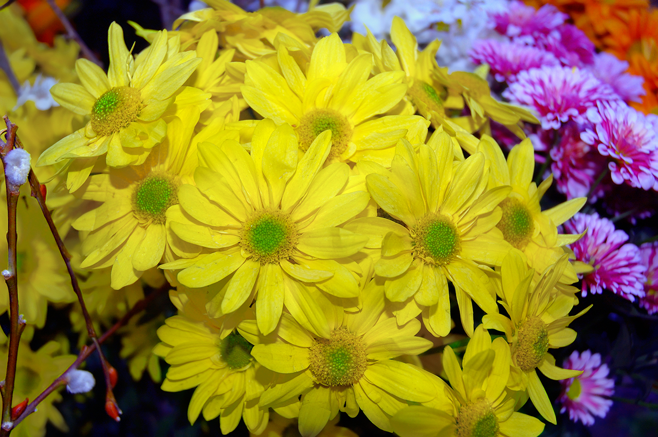 flowers for flower lovers Yellow flowers wallpapers 1280x851