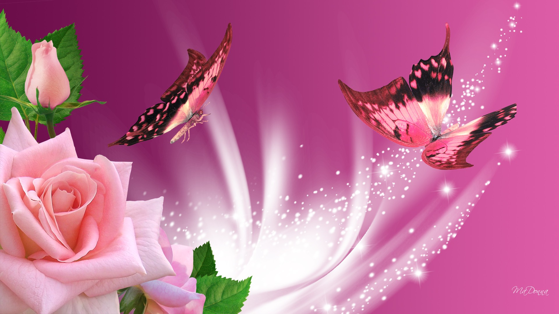 Pink Butterfly Wallpaper Images 1920x1080