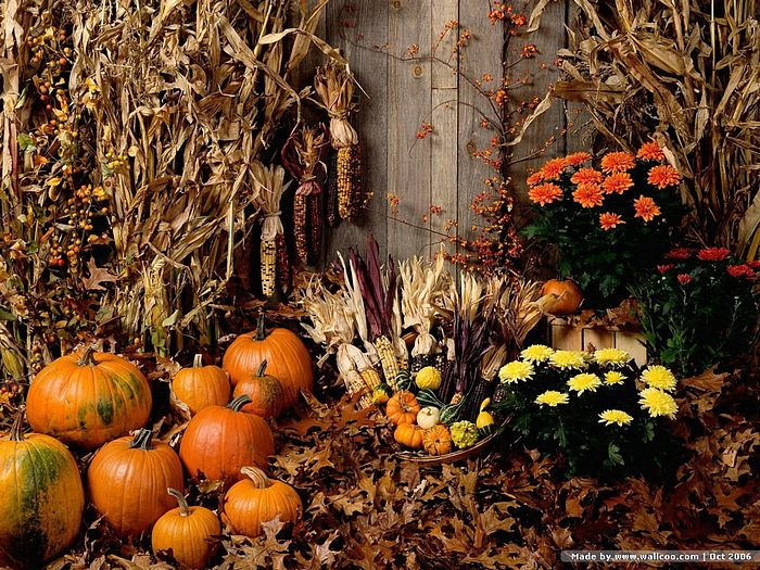 pumpkins flowers and hay decorated for fall Pumpkins Pictures 700x525