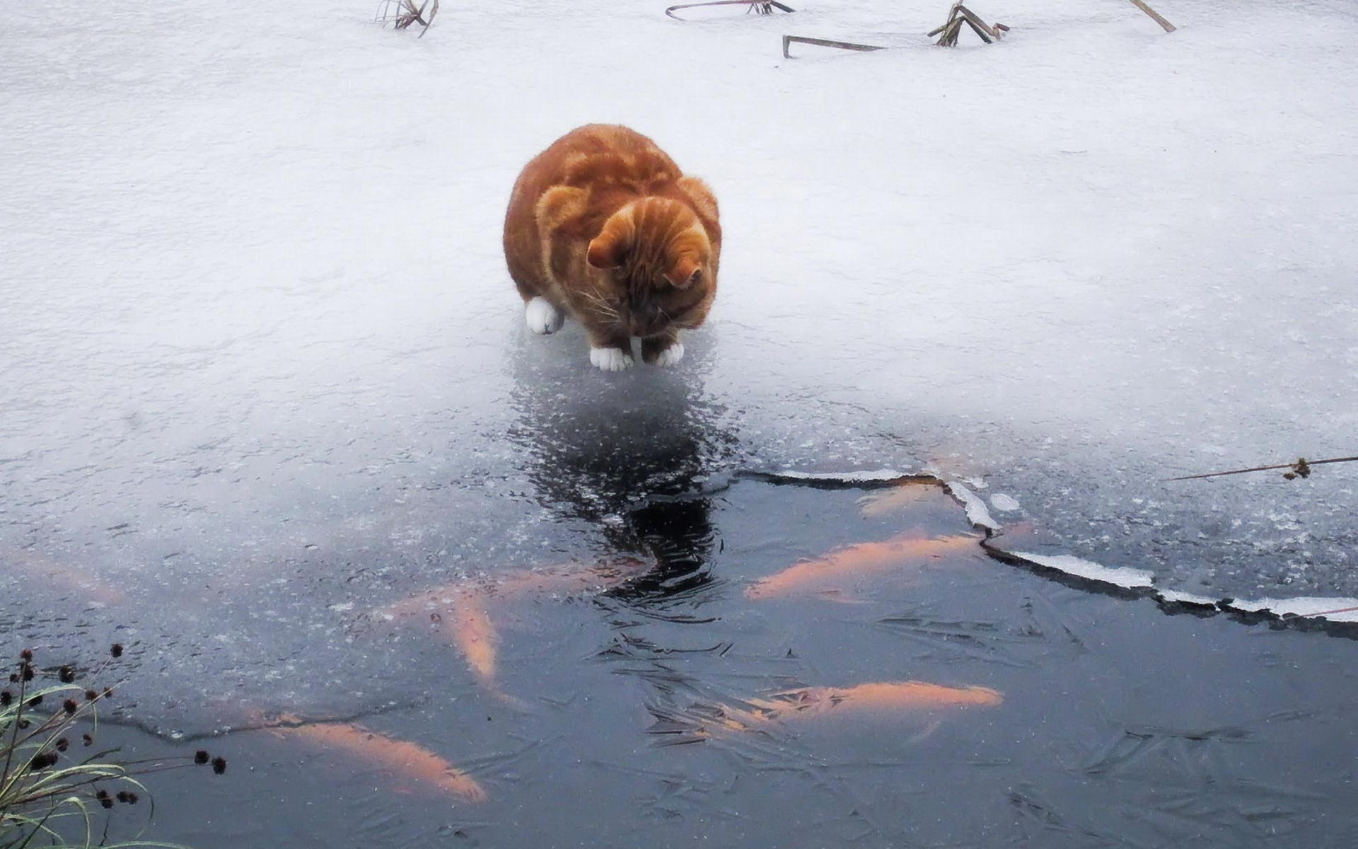Cats and fish hunting PHOTOS Funny BOOMSbeat 1920x1200