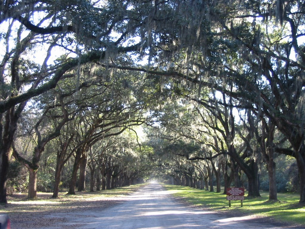 savannah georgia trees 1024x768