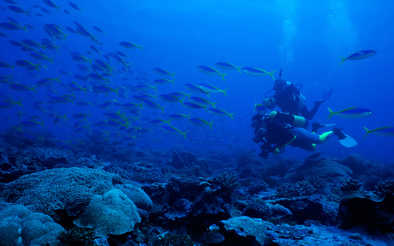3d Deep Underwater Wallpaper PicsWallpapercom 1440x900