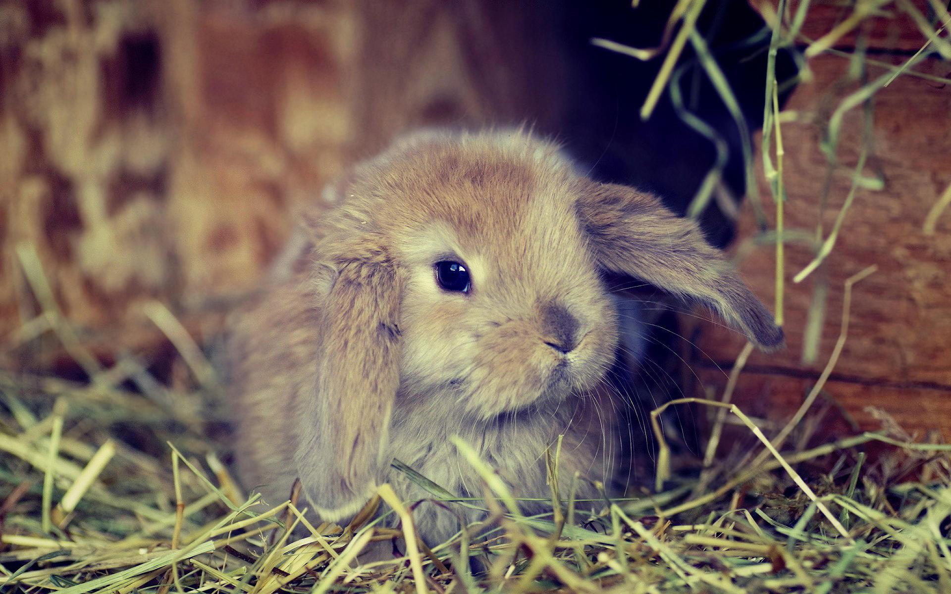 природа животное кролик  № 1593218 без смс