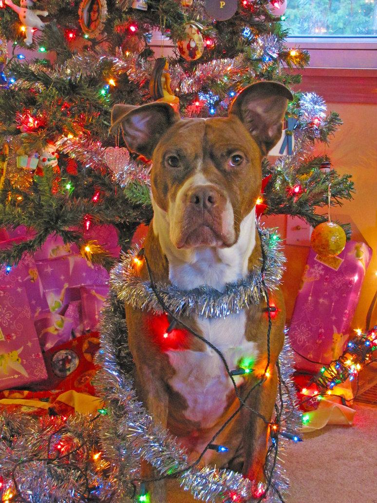 Merry Christmas Pitbull by PittyLova 774x1032