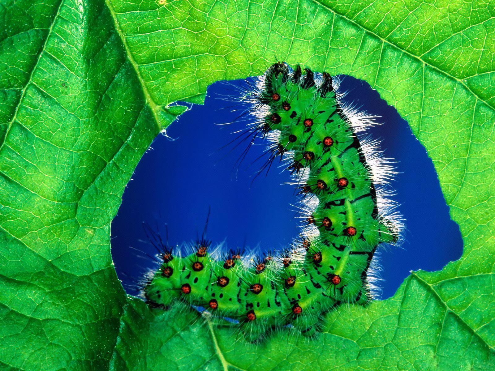 Caterpillar Desktop Wallpaper Desktop Wallpaper Gallery 1600x1200