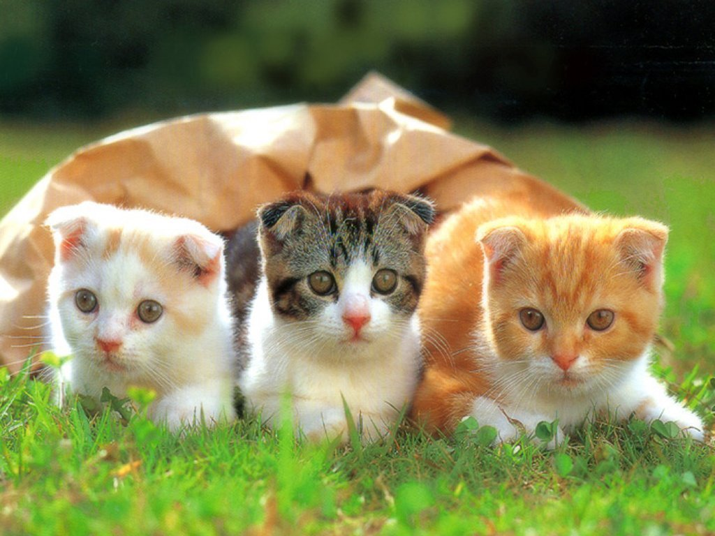 Very Funny Cats Wallpaper   Cute Kitten Pictures 1024x768