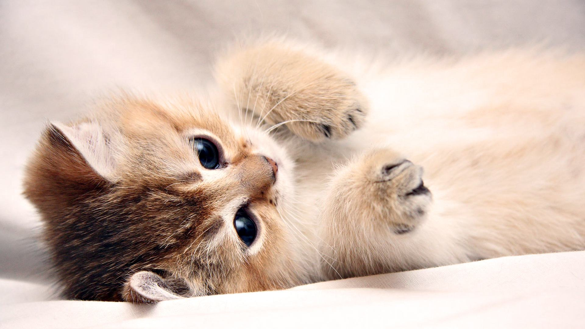 Wallpapers Backgrounds   laptop background cute kitty landscape 1920x1080