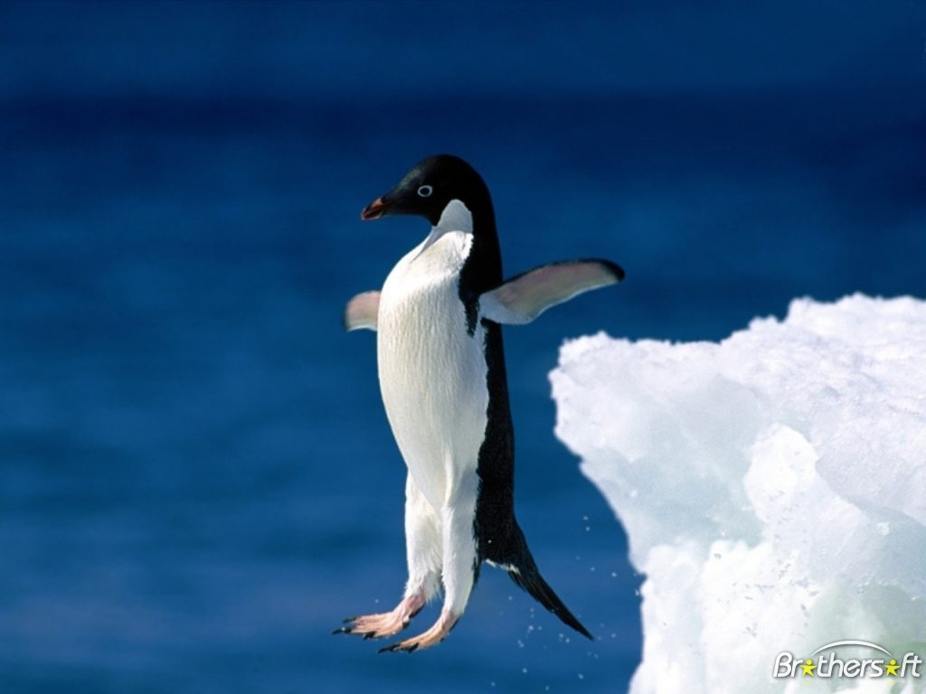 Download Penguins Screensaver Penguins Screensaver 1062634 1024x768